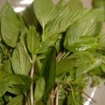 Basilic vietnamien